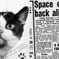 Γάτα στο διάστημα