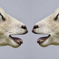 Oh sheep !!! Μέρα της Γης...