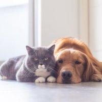 Το πιο έξυπνο κατοικίδιο (σκύλος vs γάτα)