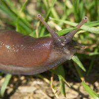 Τα αδίστακτα, τρομακτικά έντομα του καλοκαιριού